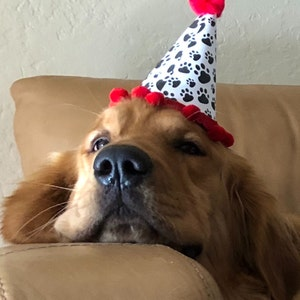 Birthday Party For Dog