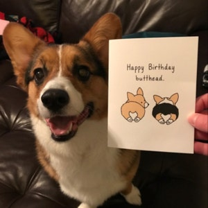 6 Welsh Corgi Puppy Dog Thank You Cards with light blue ...  Thank You Cute Corgi Puppy
