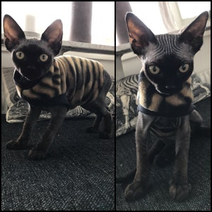 Sphynx cat clothing - cotton jersey shirt for - Devon Rex - Peterbalds-  Sphynx All Sizes - all Cats