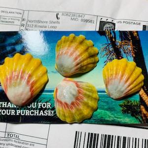奈巳 added a photo of their purchase