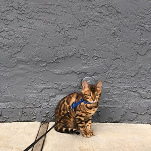 Leash Trainer for Cats & Kittens