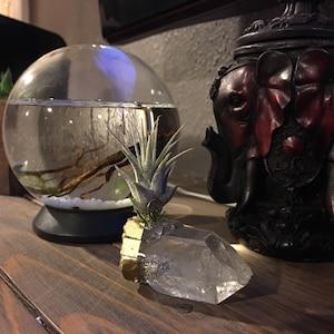 Air Plant Gold Dipped Quartz Crystal Desk Accessories Best ... Quartz Crystal Scp