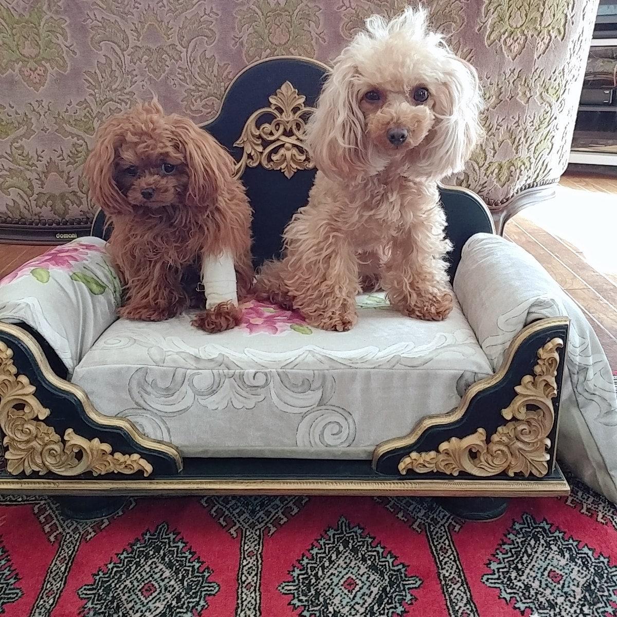 SACHIKO HIRATA added a photo of their purchase