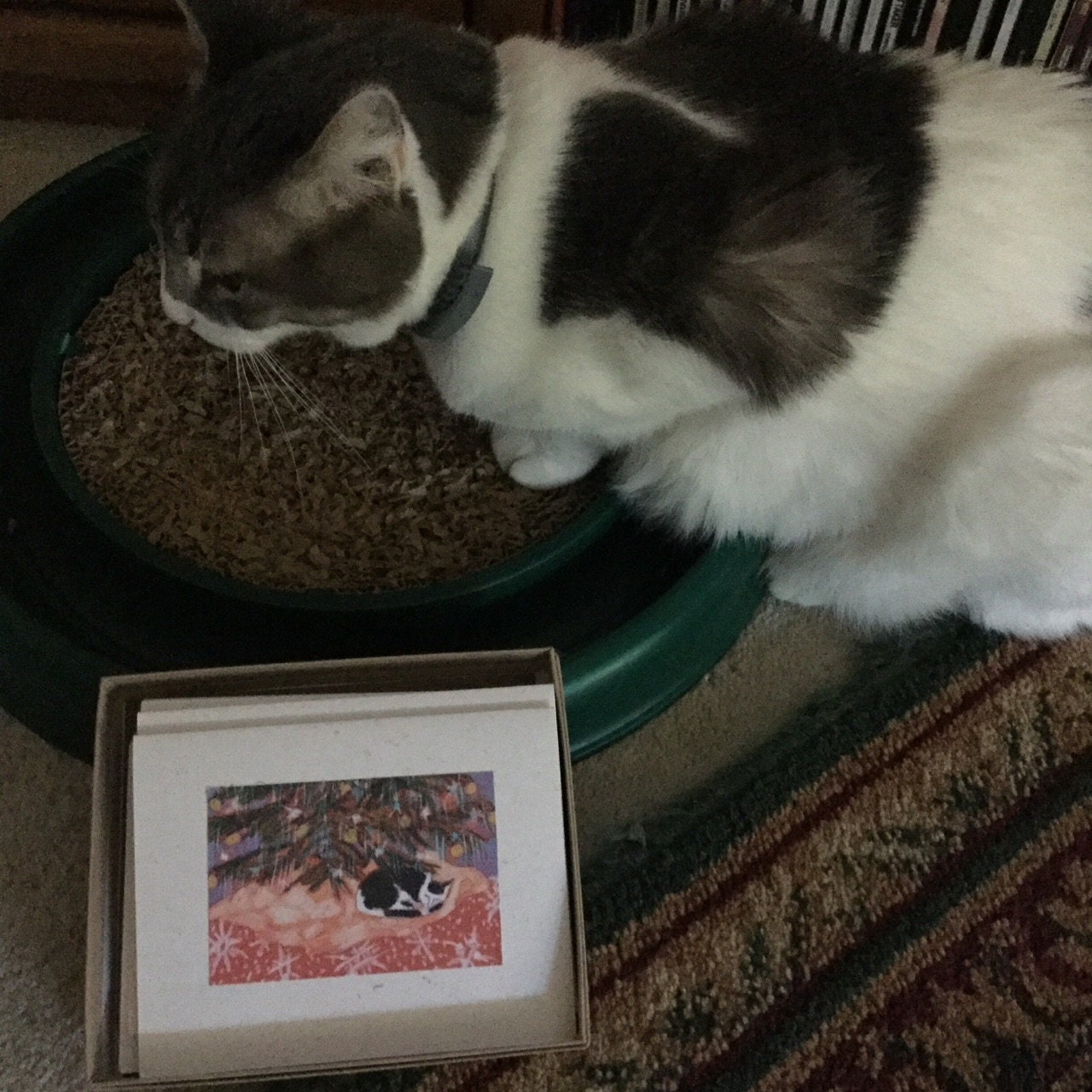 Rita Iverson added a photo of their purchase