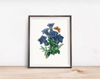 Blue Vintage Botanical Print