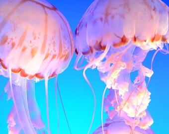 Jellyfish - Instant Digital Downloads