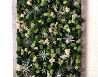 Extra Large Framed Vertical Wall Garden with Multiple Air Plants, Reindeer Moss and Lichen -20x26 Inches 4 Frame Color Options - Best Seller
