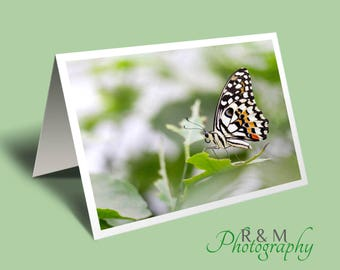 Butterfly greeting card - butterfly photo - insect - personalised card - blank greeting card - greetings card - card for any occasion