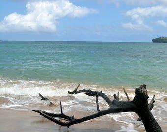 A Branch Lies On The Beach