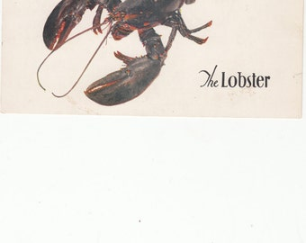 New York City/The Lobsster/Seafood Restaurant/Circa 1960/Postcard With Style