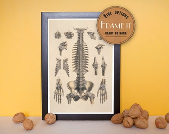 """Vintage illustration of ligaments of the head, trunk and upper extremities - framed fine art print, 8""""x10"""" ; 11""""x14"""", FREE SHIPPING - 184"""