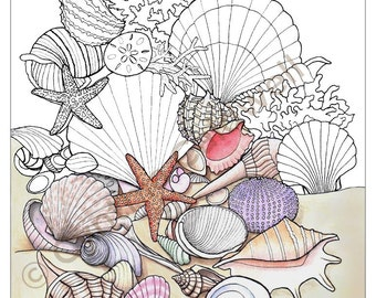 Seashells Coloring Page Instant Download