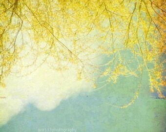 Shabby Chic Decor Yellow and Blue Wall Art Nature Photography Blue and Yellow Picture  8x8 Inch Fine Art Photography Print Willow
