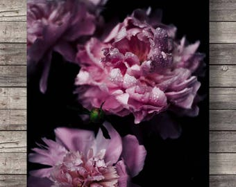 Peony flowers photo | Printable art | Botanical peony | pink black white floral | photography flower art print | instant download