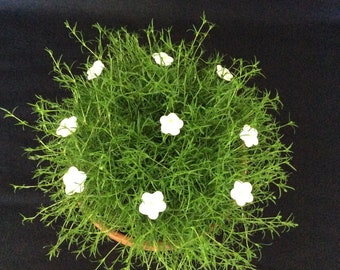 Small, white flowers, as a small gift for every occasion