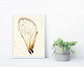 Still Life photography, 17 Year Cicada, Cicada Wing, Oddity Photography, Curiosity Art, Framed Insect Print, Framed Art