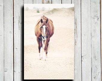 The Visit - Horse art - Horse Decor - Horse photography - Horse canvas - Animal photography