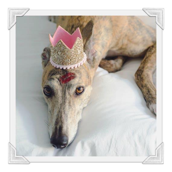 Birthday Crown Hat    Dog Birthday Hat    Pet Party Hat    Cat Kitty Puppy Pig