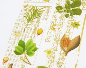 Herb illustre - Japanese Washi Masking Tape - 50mm wide - 3.3 yard