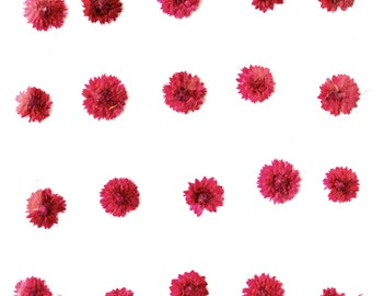 Pressed flowers, pink apricot blossom 20pcs for art, craft, card making, jewellery making