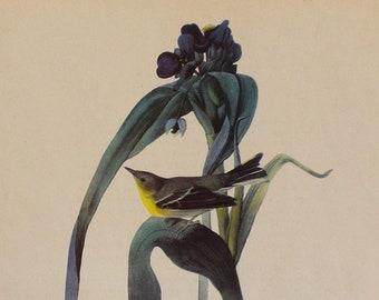 Vintage Audubon Print Pine Warbler // Bird Art // Bird Print // Vintage Bird Decor // Country Style // Nature Print //