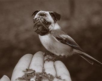 Surreal Animal Photo - Chickapug or Pugadee - 5x7 Print - Sepia Photography - Pug Art - Bird Dog - April Fool Portrait - Funny Wall Art