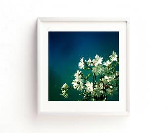 "flower photography, botanical print, botanical art, large art, large wall art, square prints, square wall art, print - ""Blossoms and Blue"""