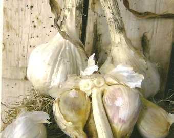 Food Photography Garlic photo on blank note card - Great Kitchen Art - Perfect All Occasion Note Card