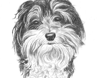 Dog or Cat Pet Portrait Sketch Drawing  Pencil original art  (one subject)  8 x 10 including mat