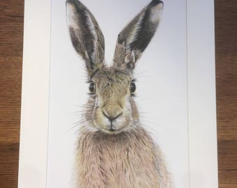Mounted print of Hare
