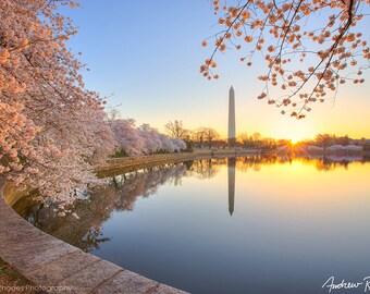 Cherry Blossom Print - Washington DC-Fotografie - Washington Monument Foto - DC Fotografie - Sunrise - Cherry Blossom Festival,