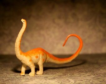 Tiny Diplodocus  - Dinosaur Photograph - Various Sizes