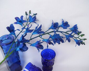 3 Stems Royal Blue Violet MO Dendrobium Orchids,Galaxy,Singapore,Blue Orchids,Stems of Blue Orchids