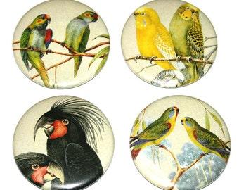 Australian Birds - Set of 4 Large Fridge Magnets bird wild life australia
