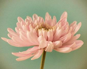 Chrysanthemum Flower Photography, Pink Mint Floral Wall Art, Bedroom Decor