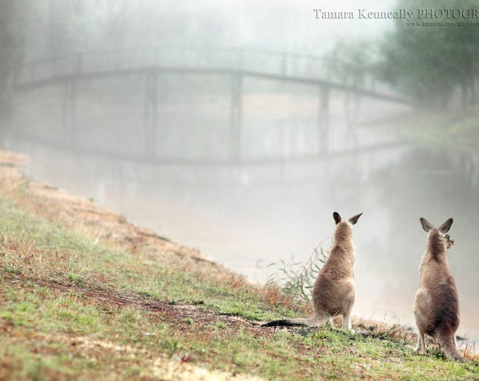 Featured listing image: Kangaroo Whispers - Matted And Unmatted Prints. Various Sizes.