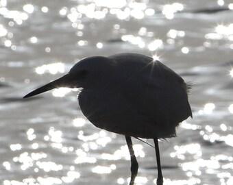 NewShopSale calme sur la photographie d'art lagon - oiseau de silhouette rétro-éclairage au coucher du soleil - impression nature décoration chambre à coucher salle de bain salon