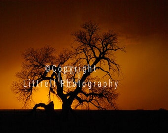 Colorado Sunset with Silhouette of a Dead Tree