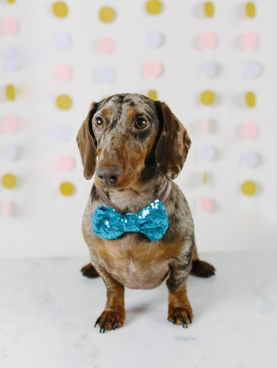 Bowtie for Dog   Dog Bow Headband    Dog Neck Tie    Pet Bow Tie    Dog Clothes