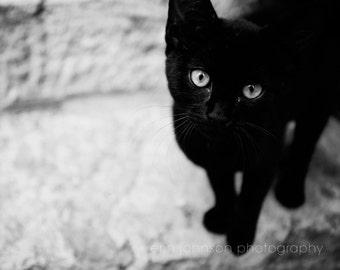 black cat photography, kitten, cat print, black and white photograph, nursery decor, baby animal, cute black kitten, Croatian Kitten