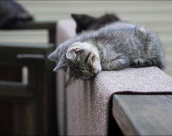 Nap Time - Kittens Cat - Color Photo Print - Fine Art Nature Photography (CB03)