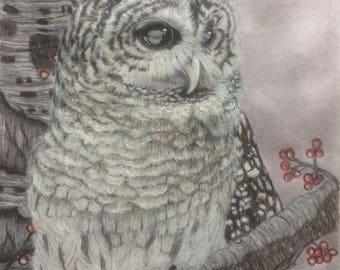Barred Owl (Print)