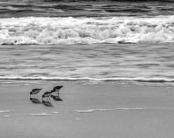 Sand Piper,Bird,Beach,Corolla,NC,North Carolina,Watercolor,Abstract,Photography,Beach Decor,Home Decor,Wall Art,OBX,Outer Banks