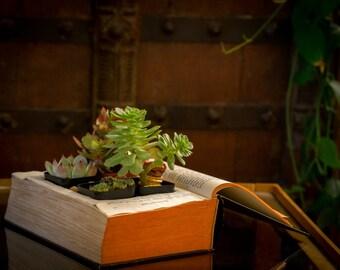 Upcycled vintage book planter, Succulent Planter,  Antique Terrarium
