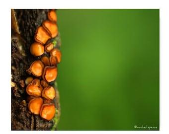 Eyelash Cup Fungus Photograph Print Affordable Home Photography Prints Nature Photography Decor Nature Lover Woodland Scene Fungi