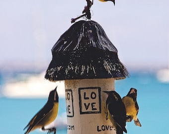 Caribbean photography_ St. Martin Birds At Feeder_8 x 10 Art Print _ Caribbean Yellow Birds  Tropical Birds _Caribbean Art _ Caribbean Decor