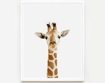 Baby Animal Nursery Art Print. Giraffe Little Darling. Safari Animal Print. Animal Wall Art. Animal Nursery Decor. Baby Animal Photo.
