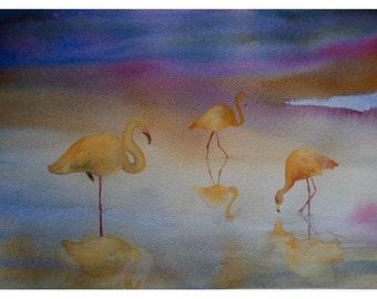 Tre fenicotteri - Three flamingos