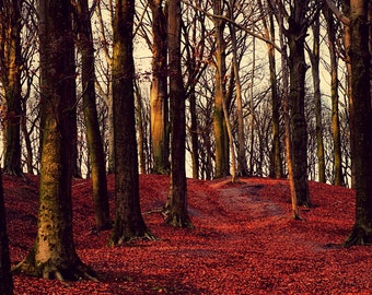 Nature Photography, Forest, Foliage, Trees, Fine Art Print, Red, Fall Photography, Autumn, Woodland, Large Wall Art, Burgundy, Enchanted