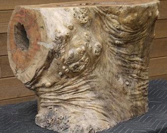 Exotic wood tree trunk